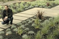 Plants for Modern Landscaping
