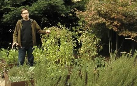Vegetable garden design ideas landscaping network for Xd garden design